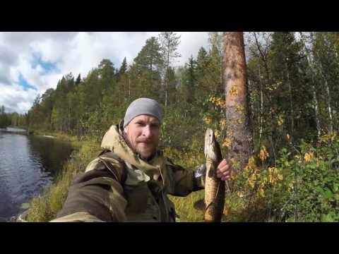 Рыбалка в Северной Карелии Последние моменты, крупная щука, тайга ,хозяин тайги. (видео)