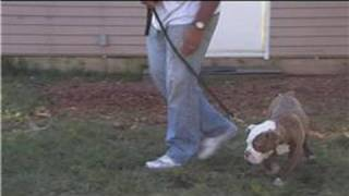 Dog Training&Care : Leash Training For Puppies