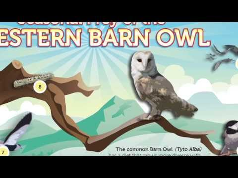 Owl Brand: The Barn Owl Food Supply