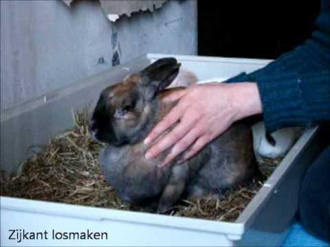 massage konijnen