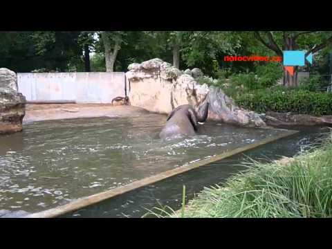 Jak se koupe slon