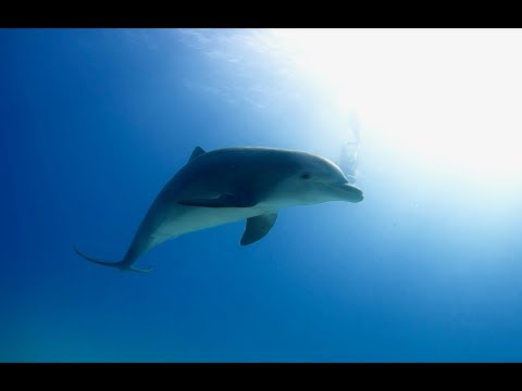 Web Série « The Freediving Universe » : « Nature is Light » (Episode 4)