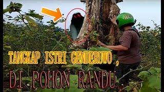 Video 🔴 JUMPA ISTRI GEND3RUWO DI POHON RANDU MP3, 3GP, MP4, WEBM, AVI, FLV September 2019