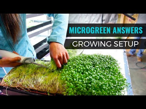 Microgreen Answers: Materials & Setup