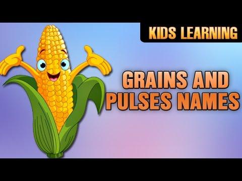 Grains And Pulses Names | Wheat, Rice , Bengal Gram