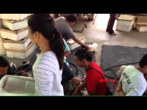Shrimp farming 4