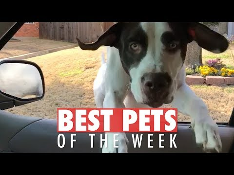 The Best Pet Videos of the Week 958078427278051537