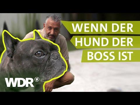 Dem Hund Grenzen setzen | Hunde verstehen | Tierratgeber | WDR