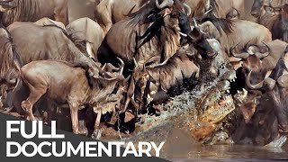 Video ► Serengeti - The Adventure (Full Documentary, HD) MP3, 3GP, MP4, WEBM, AVI, FLV Februari 2019
