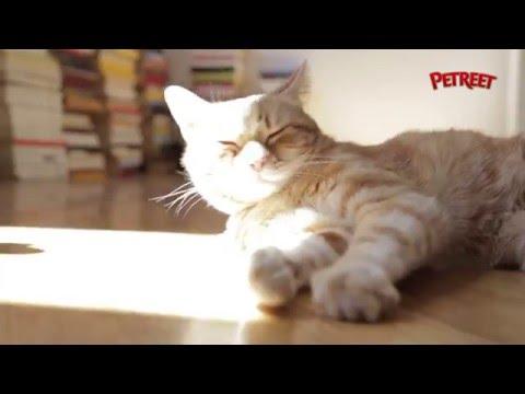 Come capire il linguaggio non verbale del tuo gatto