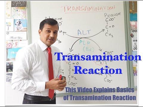 Transamination Reaction