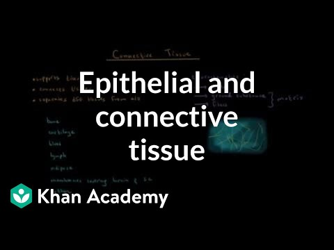 Epithelial And Connective Tissue Video Khan Academy