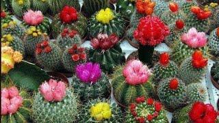 100.....Cactus variety  nice video