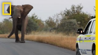 Watch: This Charging Elephant Is Probably Just Having Fun | National Geographic