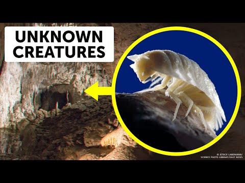 Scientists Opened a 5 MLN-Year-Old Cave And Their Heart Skipped a Beat