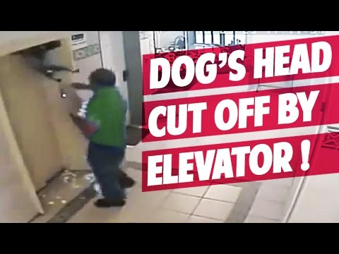 OUCH! Dog's head cut off by the Elevator's door?