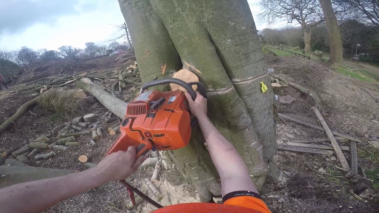 Beech Removal