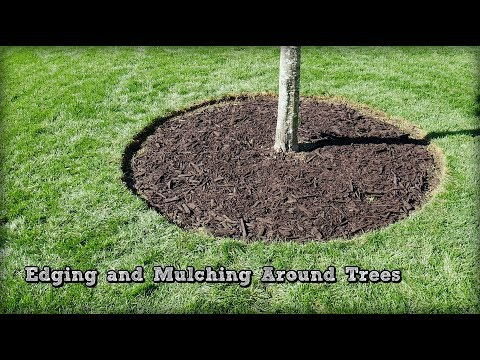 Edging and Mulching Around Trees - How To Redefine An Edge (видео)