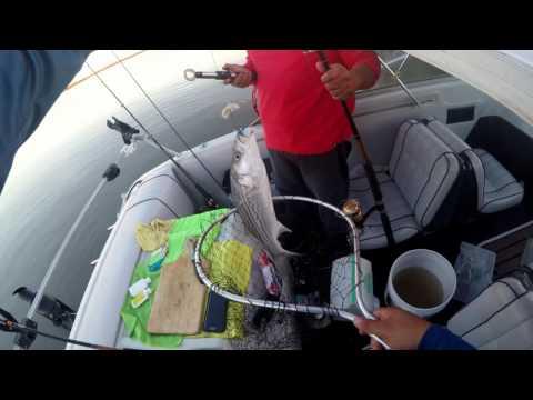 Fishing suisun slough