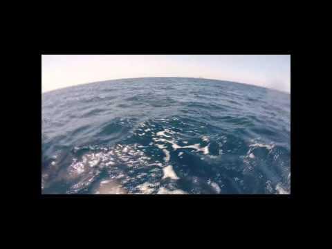 Video Shark Encounter In Southern California Dana Point