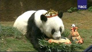 Старейшей в мире панде исполнилось 37 лет