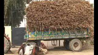 Mills Pakistan  city images : Mehran SUgar Mills Limited (Part 1 of 5)
