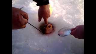Ловля Карпа, последний лед, Февраль