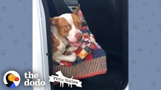 This Couple Found A Stray Pit Bull In Their Truck | The Dodo Pittie Nation by The Dodo