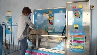 Video K9000 Dog Wash Demonstration MP3, 3GP, MP4, WEBM, AVI, FLV Agustus 2018