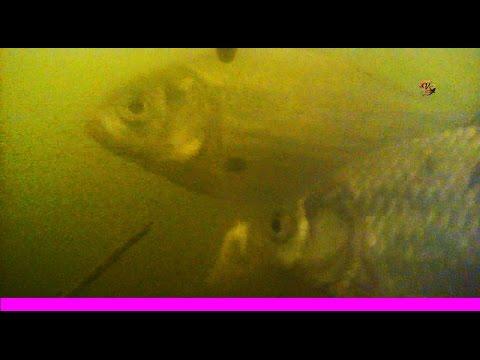 ловля плотвы на болтушку видео