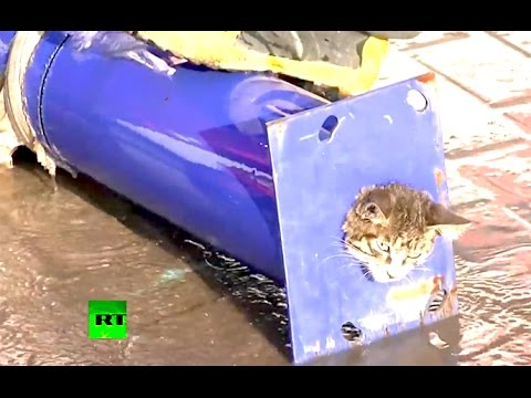 Ozzy Man Commentates on Kitten Stuck in Pipe