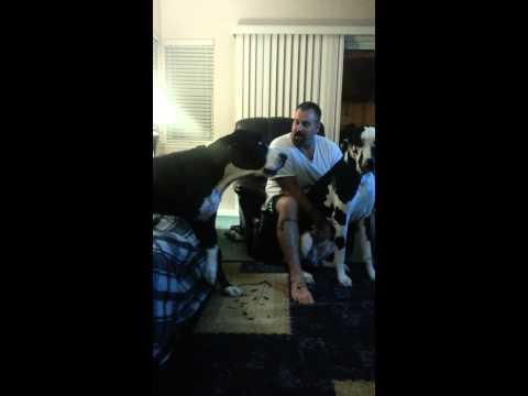 انهيار  كلب غيور  يطالب بحصته من الأهتمام