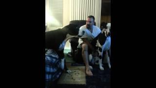 Ten olbrzymi dog nie cierpi być ignorowany! Jego fochy rozbawiły właścicieli do łez!