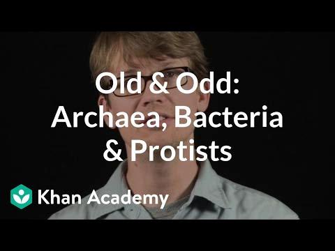 Old Odd Archaea Bacteria Protists Video Khan Academy
