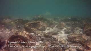 Al Aqah United Arab Emirates  City pictures : Fujairah Rotana Resort & Spa - Al Aqah Beach - United Arab Emirates 2013