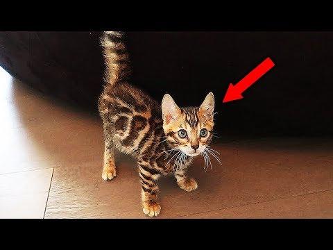 MEET THE FAZE HOUSE NEW PET!! (INSANELY CUTE CAT) (видео)