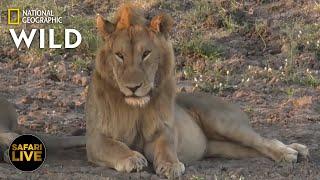 Safari Live - Day 305   Nat Geo Wild by Nat Geo WILD