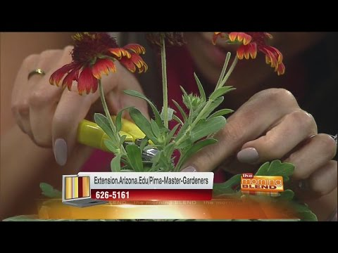 Pima County Master Gardeners - Preparing your garden for monsoon