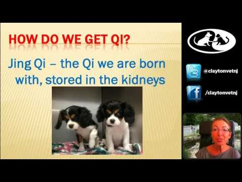 how to treat qi deficiency