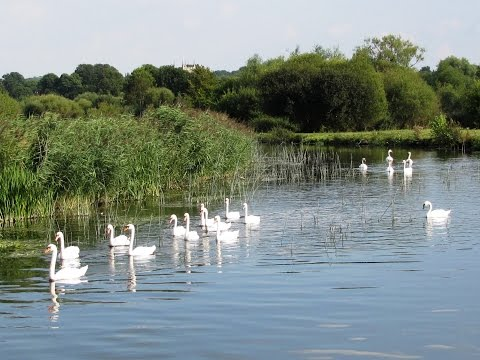 Butterflies and Wildlife on the Hampshire River Avon from Downton round | wiltshire  Walks