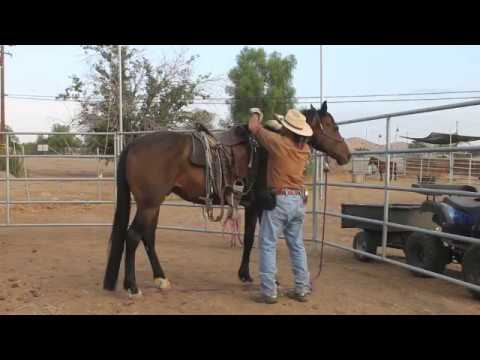 Horse in bucking fit - how to control a bucking horse