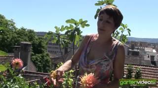 #1314 Sabine Reber über Pflanzmöglichkeiten auf Terrasse und Balkon