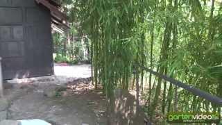 #1282 Parco Scherrer Morcote - fernöstlicher Garten