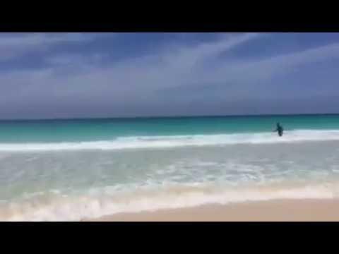 Blauwe haai sterft door fotosessie