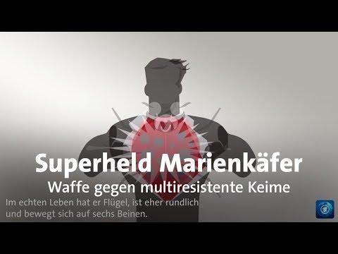 Superheld Marienkäfer