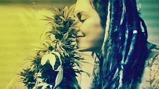 From Under The Seed Desk with Marijuana Man: Marijuana, What's The Big Stink? by Pot TV