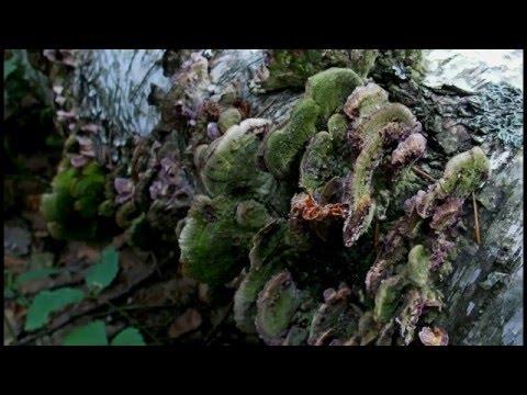 Видео открытка. Красивая природа