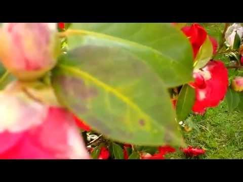 BlackBerry Q10: Test Video Full HD 1080p 30fps