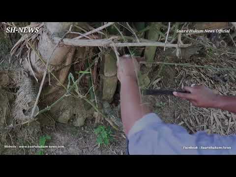 Unik, Bambu Patel Lele Songgo Langit