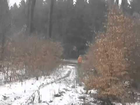 il mistero della bambina che vola nel bosco: incredibile ma vero!!